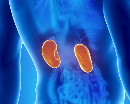 신장 감염의 증상과 치료 방법