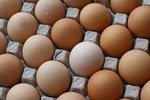 달걀의 생산