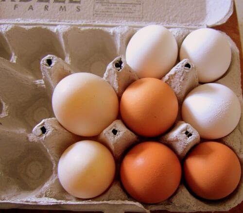 달걀에 관한 진실과 거짓