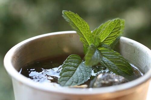 위장염 치료를 위한 식물