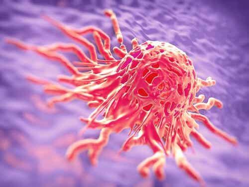 암을 유발할 수 있는 음식