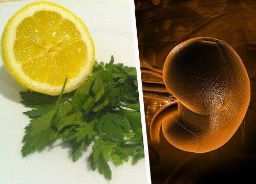 레몬과 파슬리로 신장 해독하기