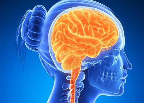 뇌 활성화를 위한 6가지 식품