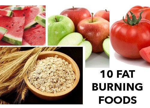 지방을 태우는 10가지 음식들