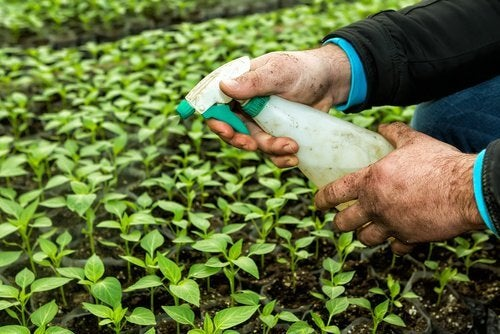 갑상선에 영향을 미칠 수 있는 8가지 물품 농약