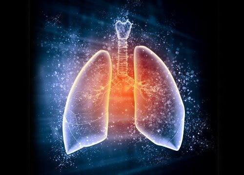 왜 폐를 디톡스해야 할까?