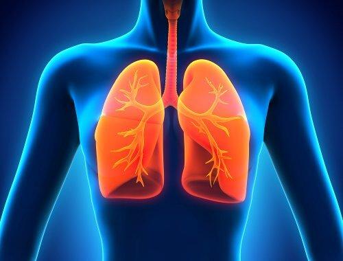 폐를 디톡스해주는 식단
