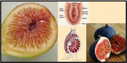 figs-sex-organs