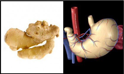 ginger-stomach