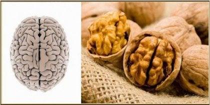 nuts-brain-e1453497078228