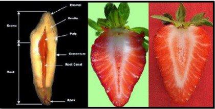 건강식품 딸기