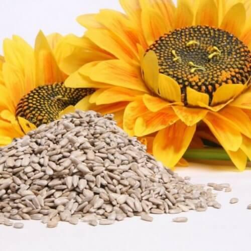 부엌에 구비해두면 좋은 씨앗