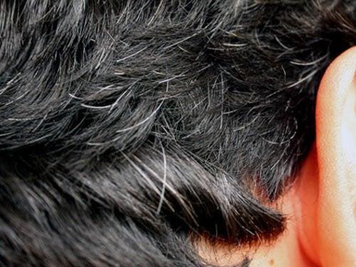 1-gray-hairs