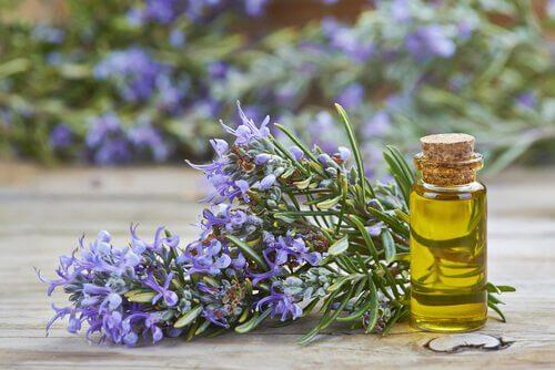 2-rosemary-oil-1