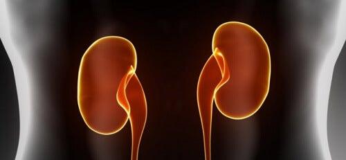 신장 기능을 증진하는 채소들