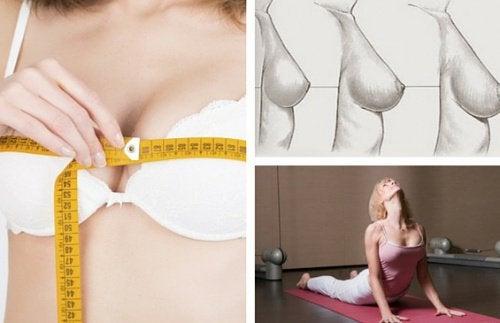1-chest-exercises