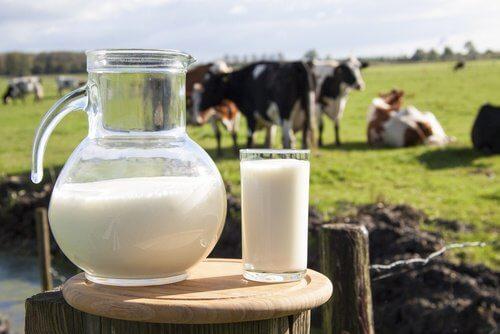 우유가 건강에 해로운 이유