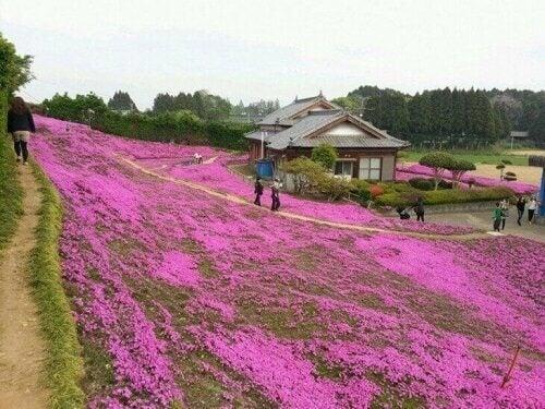 아픈 아내를 위한 꽃밭