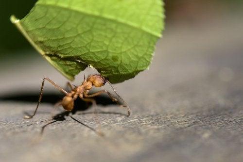 lemon-for-ants-3