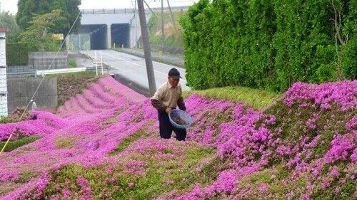 시력을 잃은 아내를 위해 1000송이 꽃을 심은 남자 이야기