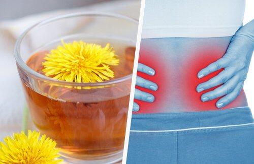 1-dandelion-kidneys
