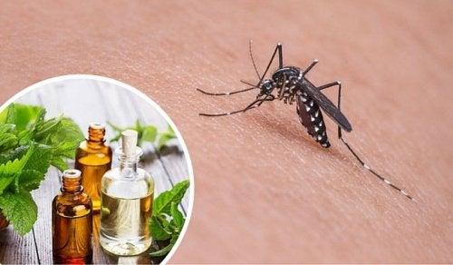 모기를 쫓아내는 11가지 약초