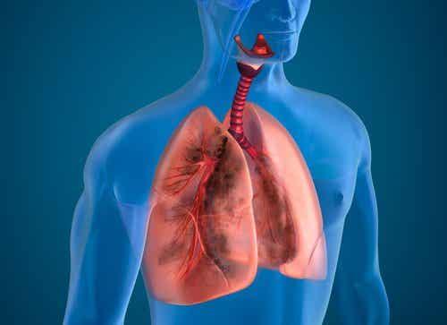 흡연자의 폐를 정화하는 10가지 천연 재료