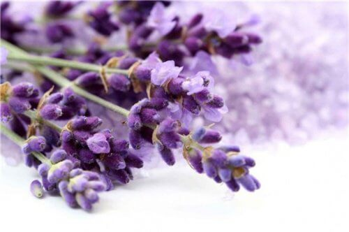 lavender-relax-500x332