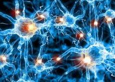 1-brain-neurons