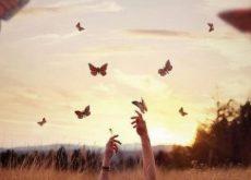 1-butterflies-in-field-e1478732887886