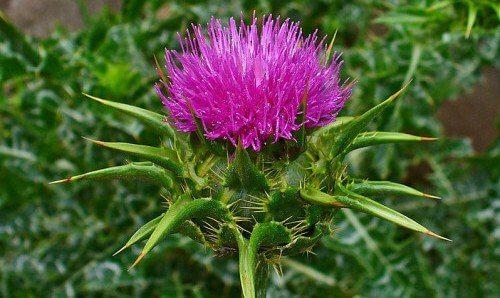 2-herbs-flowers