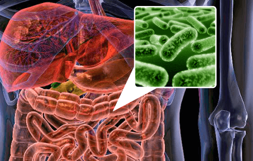 장내 자연 공생하는 세균을 생성시켜주는 식품 5가지