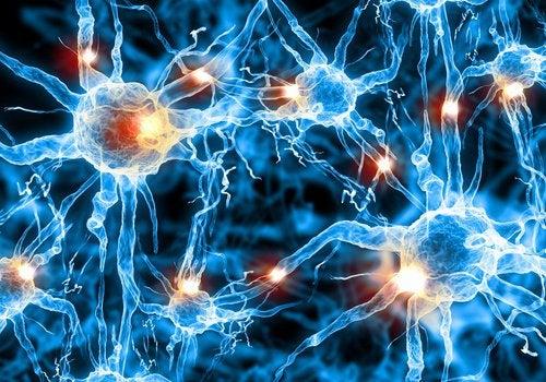 뇌 기능을 뇌 체조