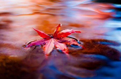 1-maple-leaf-in-water
