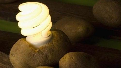1-potato-light