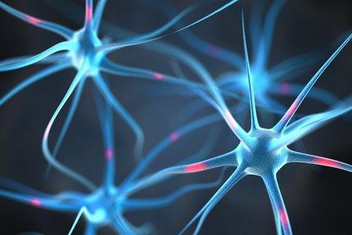 neuron-connections