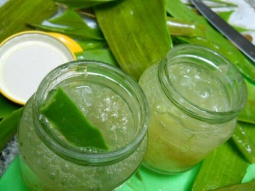 homemade-aloe-vera-cream