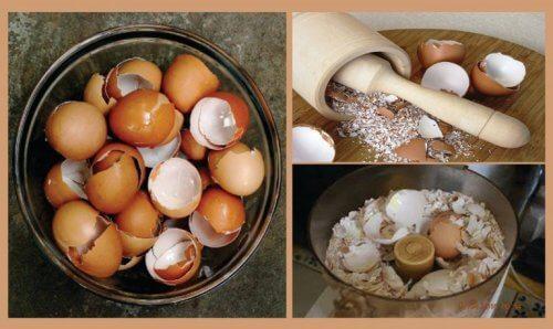 달걀 껍데기를 이용한 자연요법 6가지