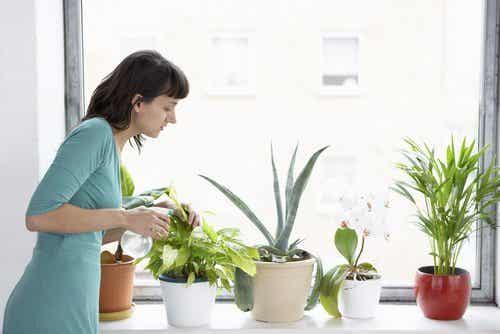 집 안의 공기를 정화시켜주는 8가지 식물