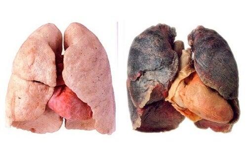 폐를 깨끗하게 만드는 생활 비법