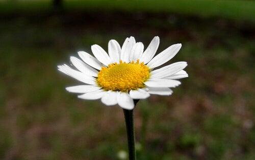게실증 치료에 효과적인 식물