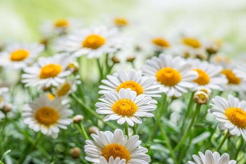 가정에서 기를 수 있는 5가지 치유 식물