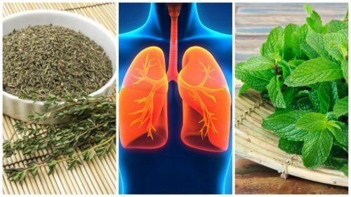 폐 건강에 도움이 되는 8가지 허브
