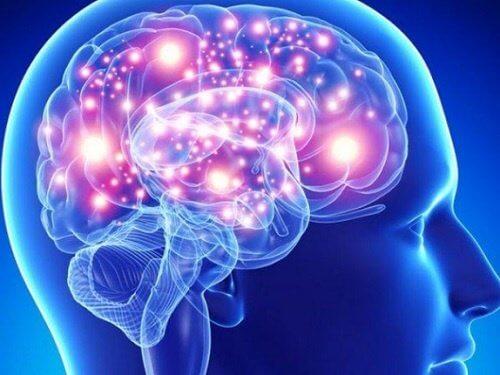 뇌를 위한 최고의 허브 및 향신료