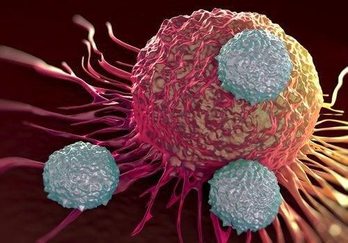 알칼리성 식품 속 놀라운 항암 효과