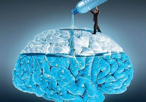 물이 뇌 기능에 미치는 영향 5가지