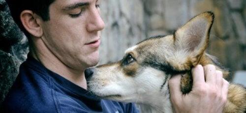 고등학교에서 대학교로의 이행을돕는 동물 매개 요법