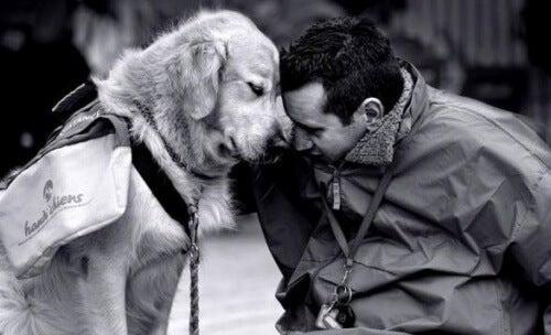 향수병을 극복하기 위해 개와 함께하기