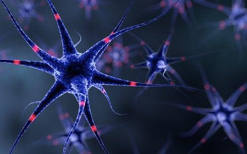 신경계를 튼튼하게 만드는 6가지 방법