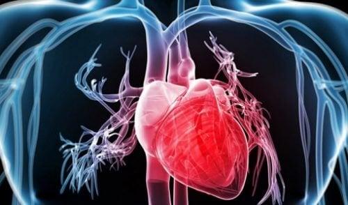 브로콜리가 심혈관계